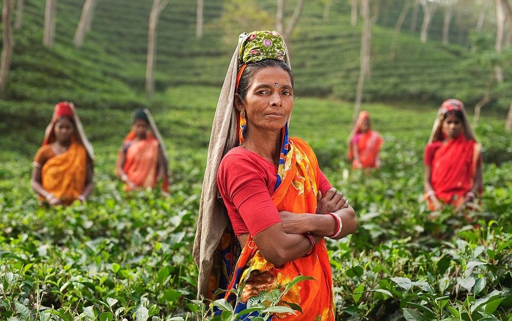 Subsidy for Promoting Indian Tea