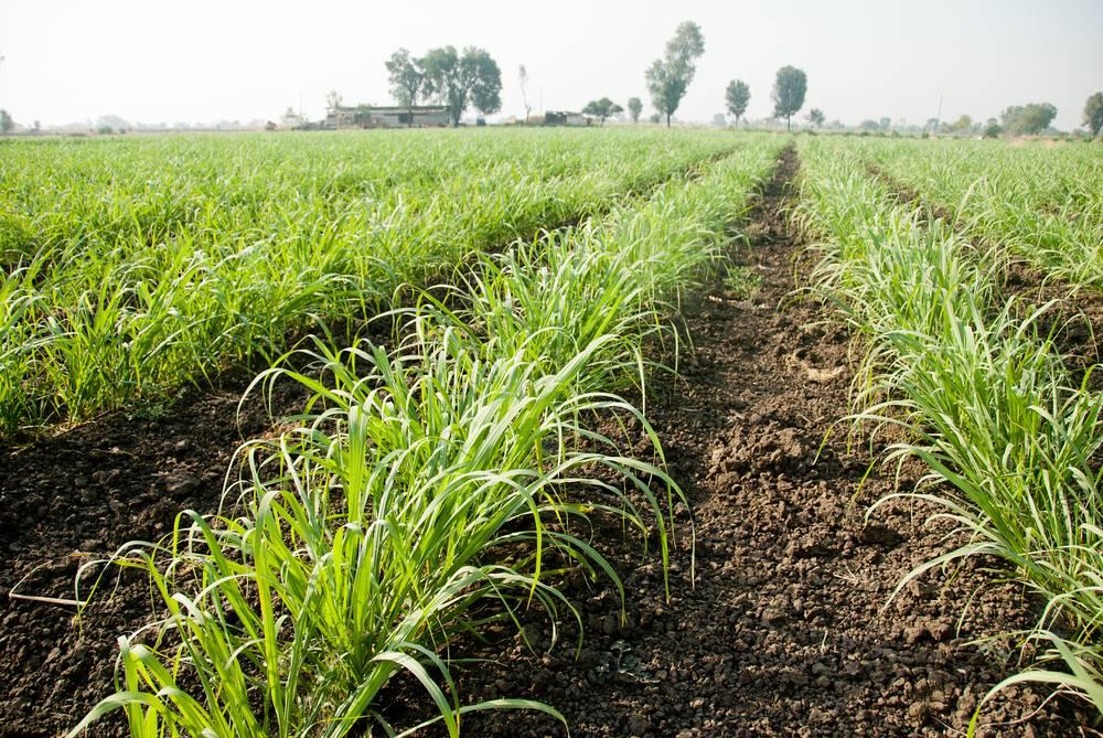 Bihar-Rajya-Fasal-Sahayata-Yojana