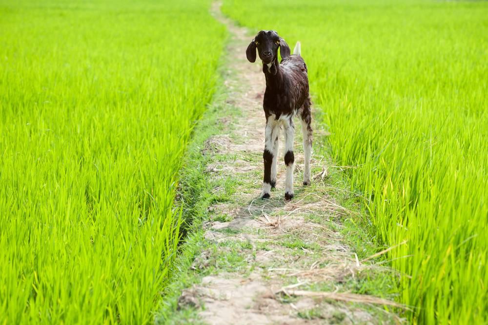 Tamil Nadu Land Conversion