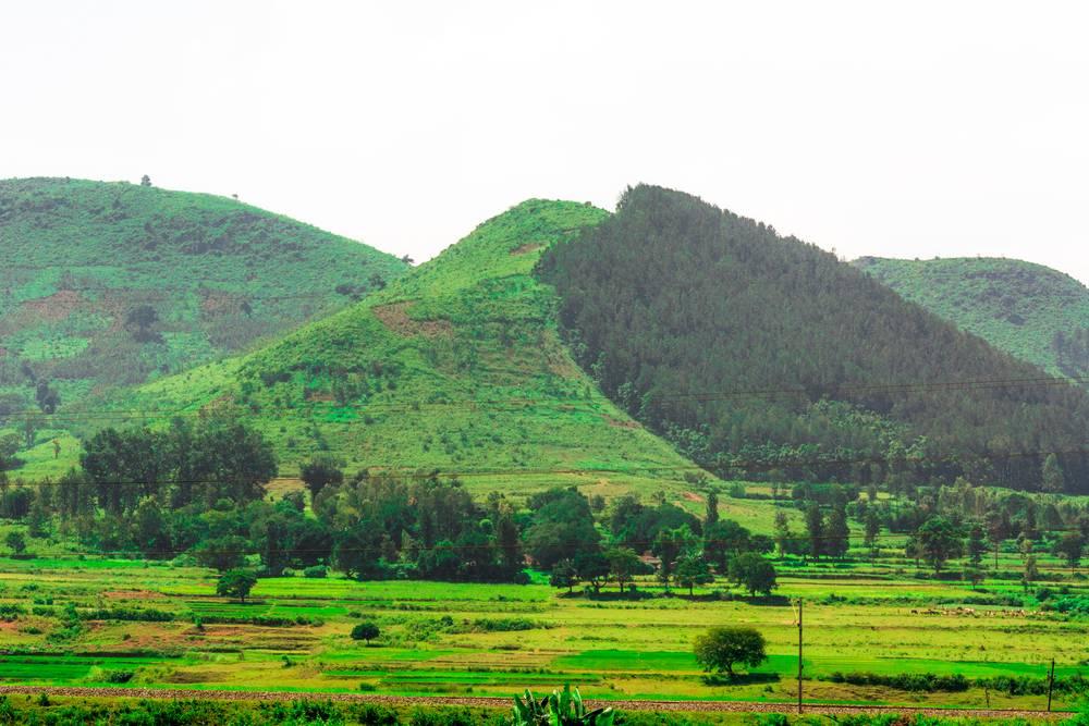 Linking Aadhaar Number with Andhra Pradesh Land Records
