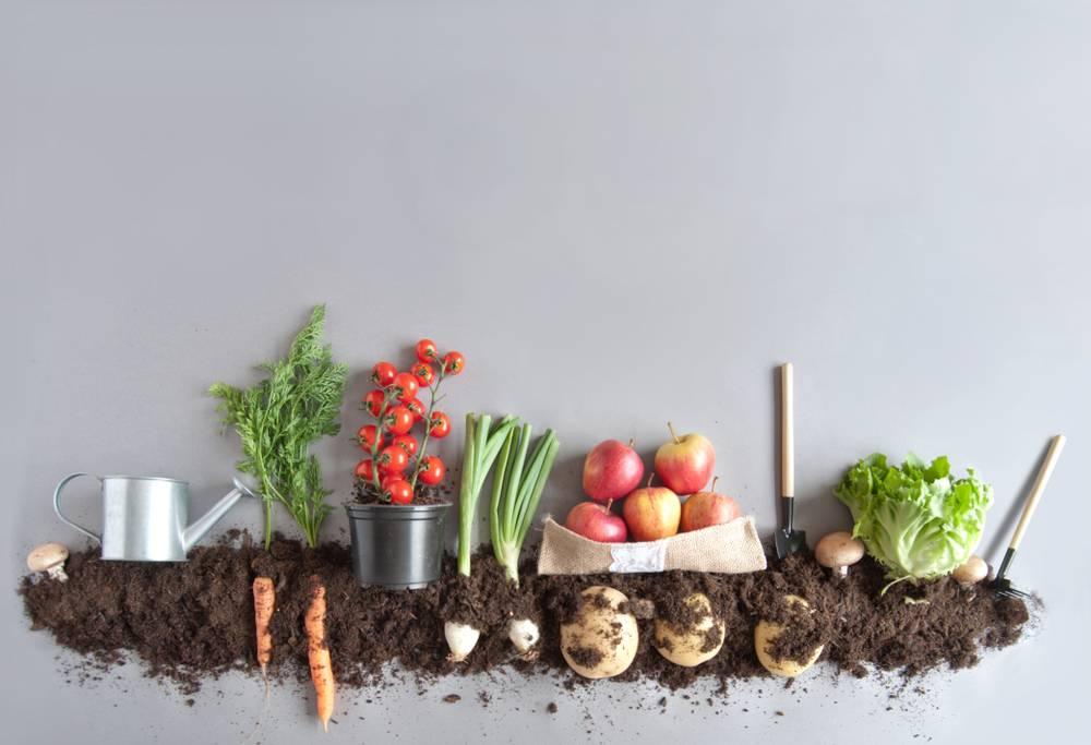 Agriculture Entrepreneurship Promotion Scheme
