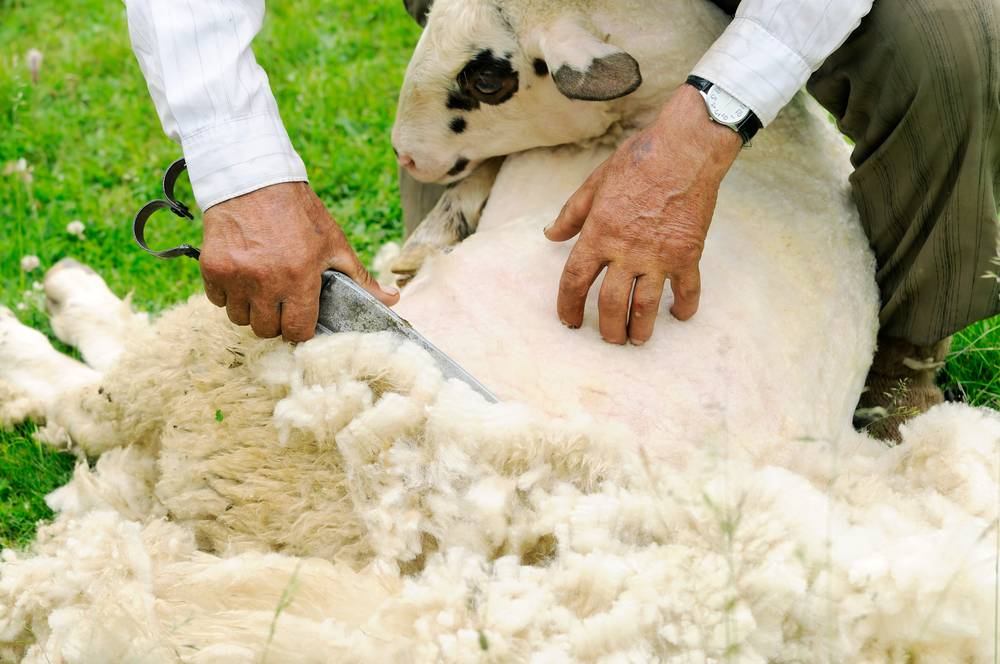 Integrated Wool Development Programme