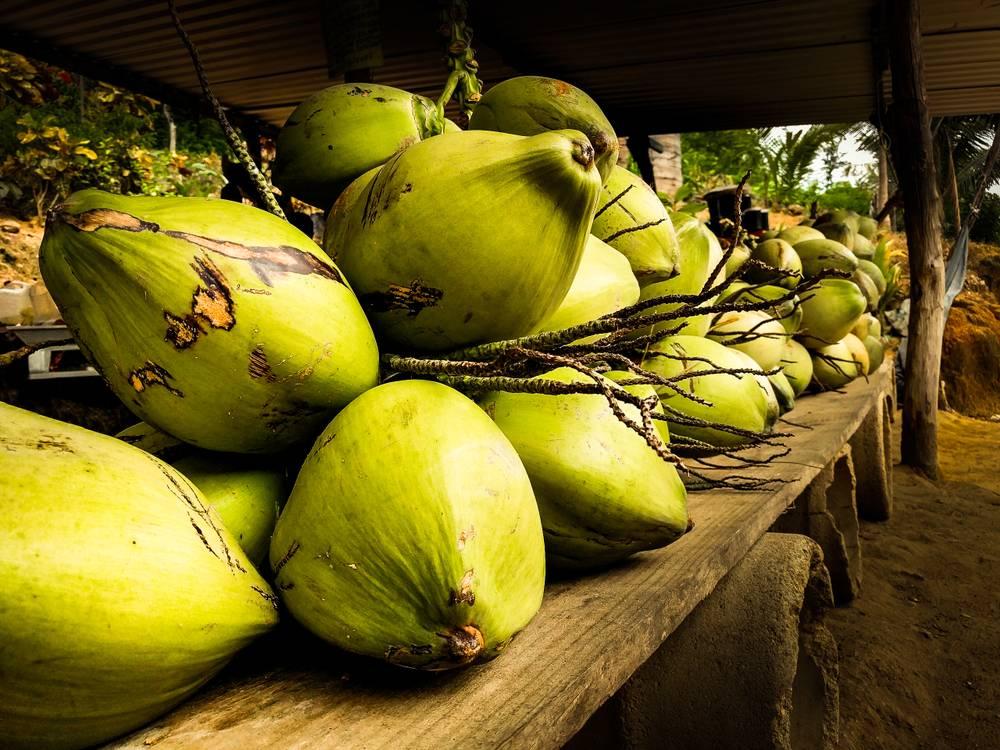 Coconut Palm Insurance Scheme