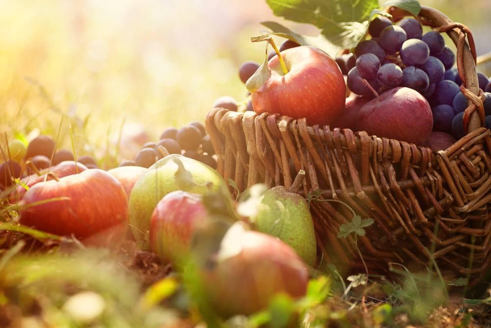 Scheme for Establishing Fruit Garden