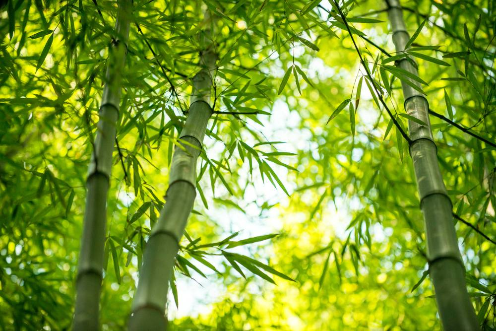 Capital Investment Subsidy Scheme for Bamboo