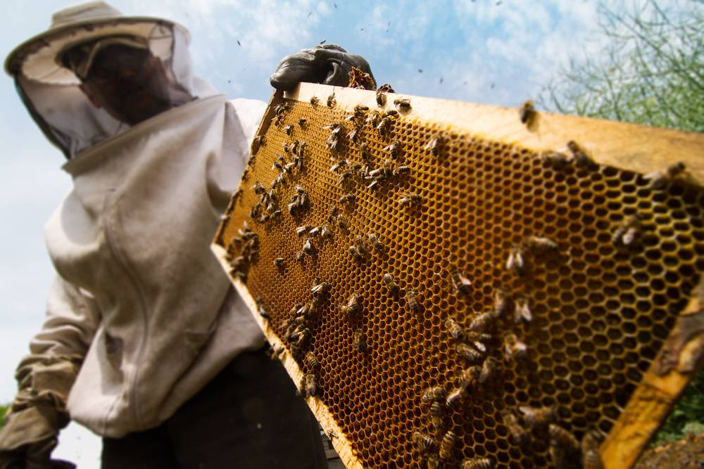 Financing Beekeeping Activities
