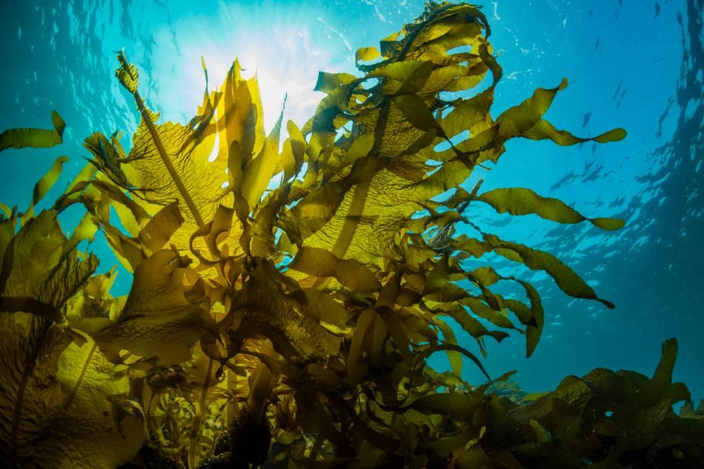 Seaweed Cultivation Scheme